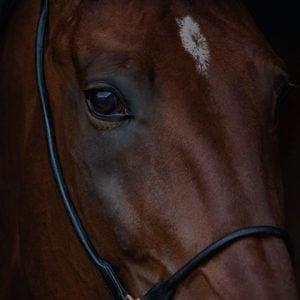 equestrian tile bnpl