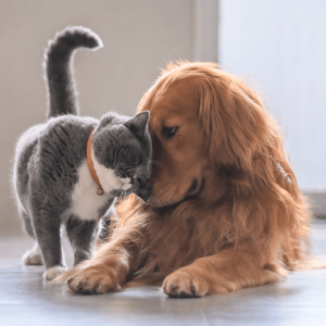 Pets Vets Buy Now Pay Later with humm